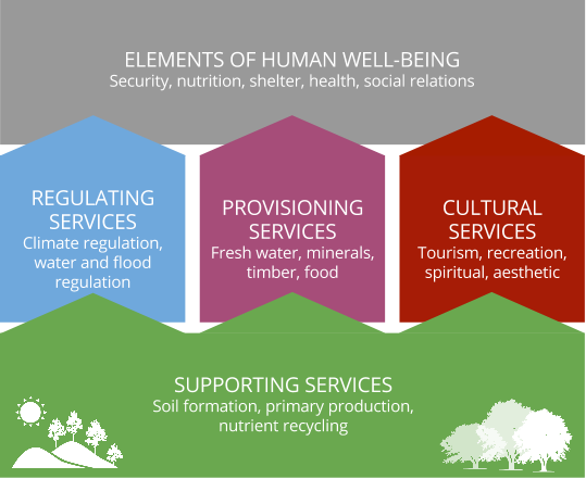 The relationship between supporting, regulating, provisioning and cultural ecosystem services and human well-being.