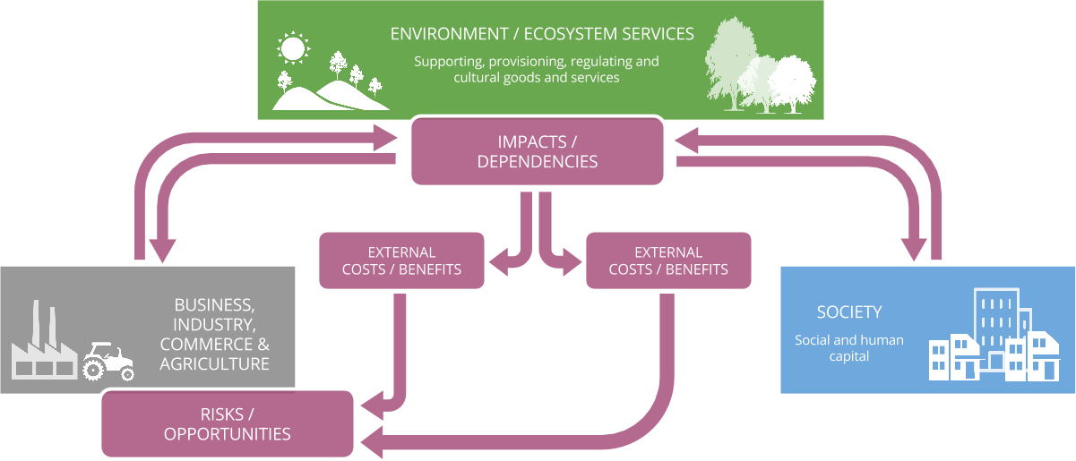 Business impacts and dependencies on nature