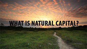WWF video, natural capital