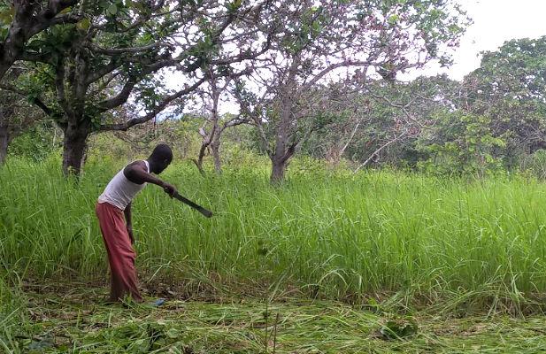 Man slashing vegetation
