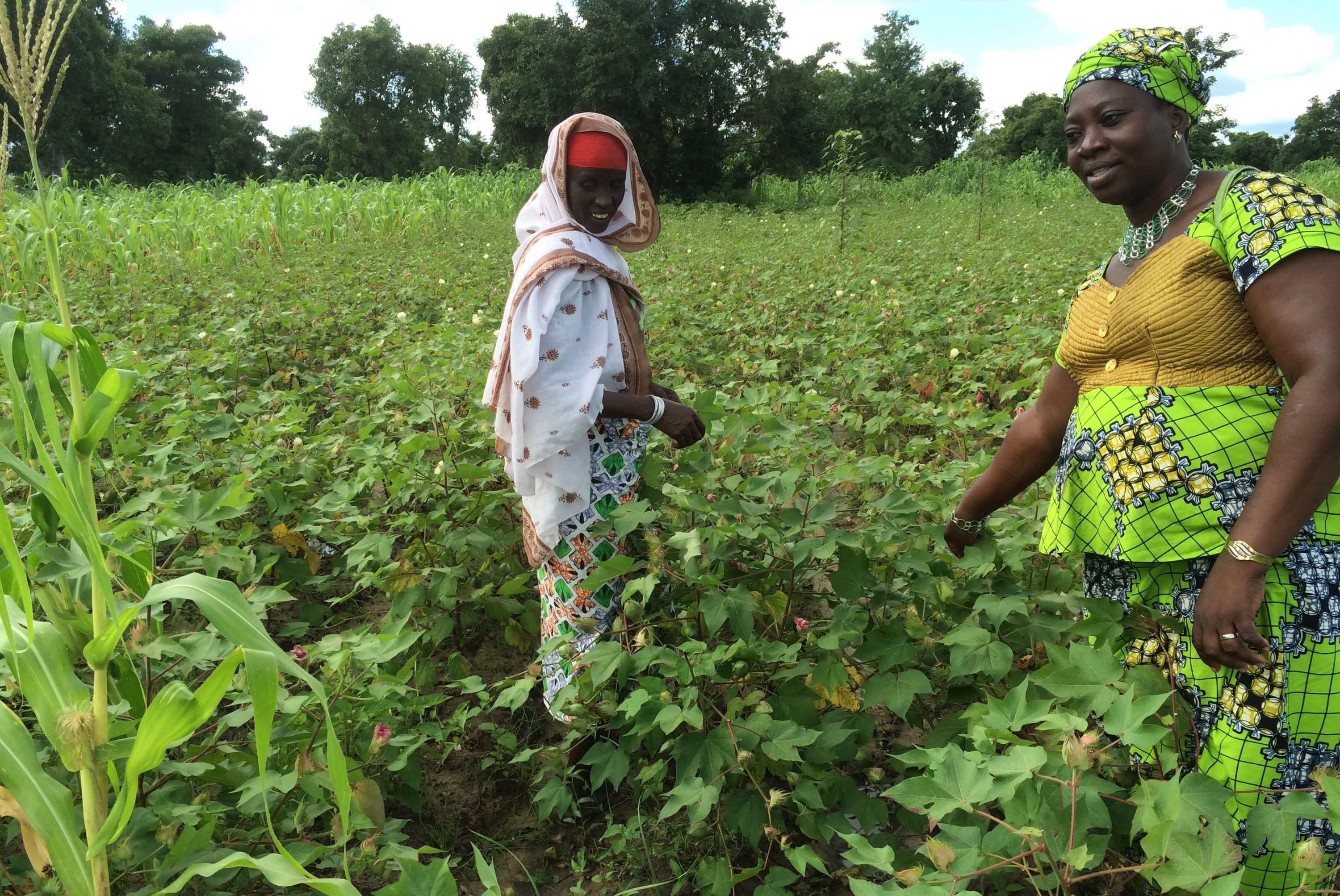 Women working in fields in Ghana
