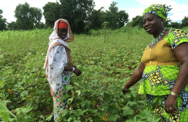 Women working in agriculture in Benin