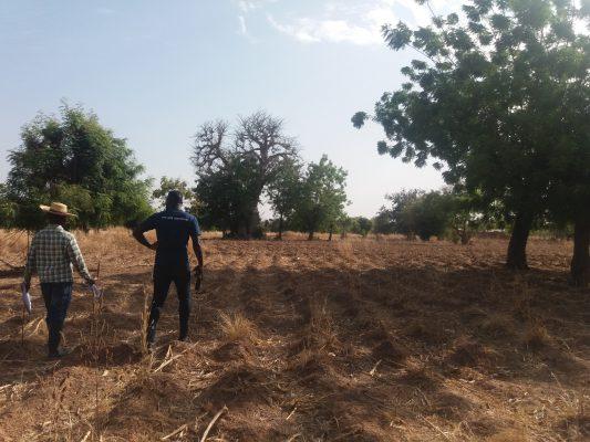 Farmer Managed Natural Regeneration